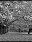 Сочинение на тему Осень